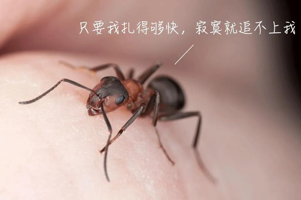 小心这种夺命蚁